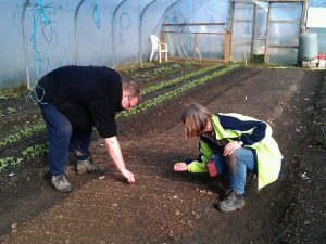 polytunnel-weeding-camelcsa-070314