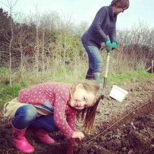 potato-planting-daisy-camelcsa-300314