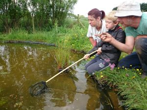 pond-dipping-camelcsa-300514