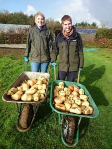 butternut-squash-harvest-camelcsa-071114