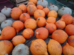 winter-squashes-camelcsa-0216