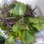 mixed-salad-leaves-camelcsa-040316