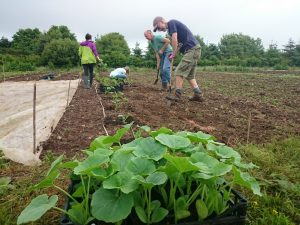 squash-planting-camelcsa-120616