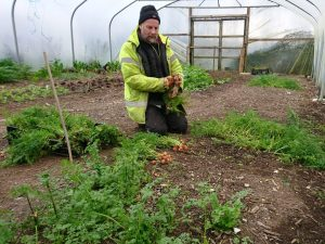 harvesting-parisian-carrots-camelcsa-071217