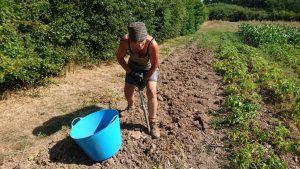 digging-potatoes-camelca-130718