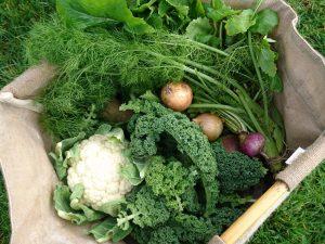 veg-box-camelcsa-110119