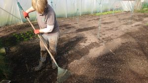 Prepping-veg-beds-polytunnel-camelcsa-0319