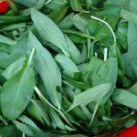 wild-garlic-camelcsa-080319
