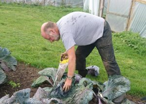 sawing-red-cabbages-camelcsa-040919
