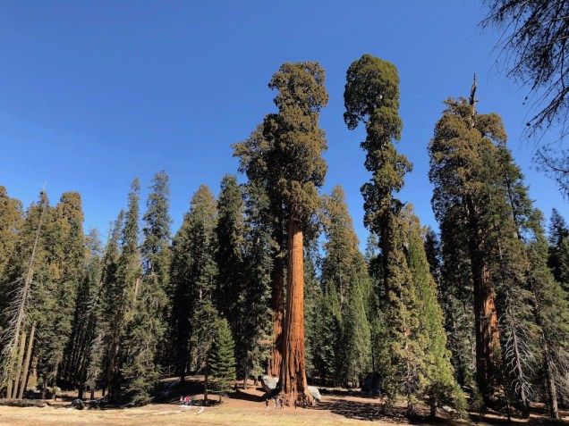 Tall Trees Trail Sequoia National Park