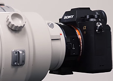ソニーα9とキヤノンEF300mm F2.8L IS II USMとEF400mm F2.8L IS II USMの使用レビュー