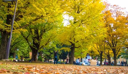 上野公園お散歩 紅葉&イルミネーション