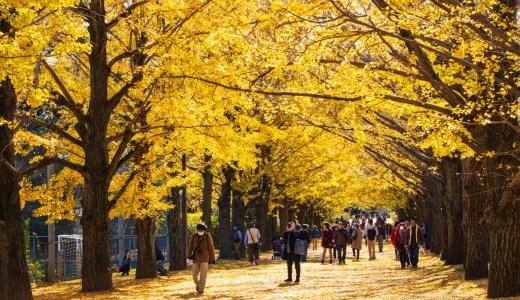 昭和記念公園 紅葉散りゆく落ち葉のじゅうたん