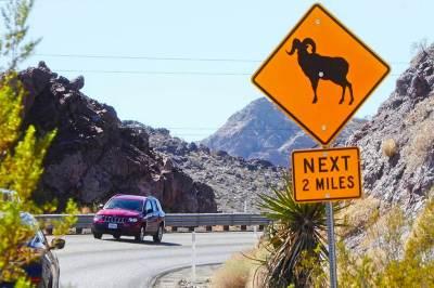 Big Horn Sheep Sign