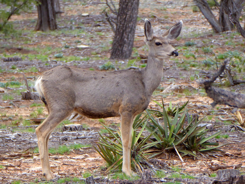 We saw this Mule Deer on the side of the road