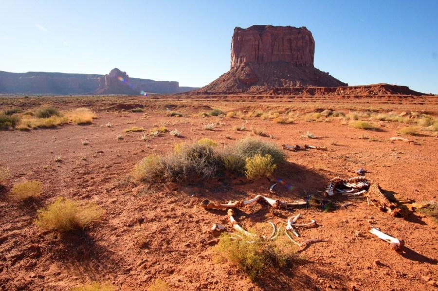 Bones in Monument Valley