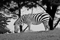Pittsburgh Zoo (Joshua Hudson)