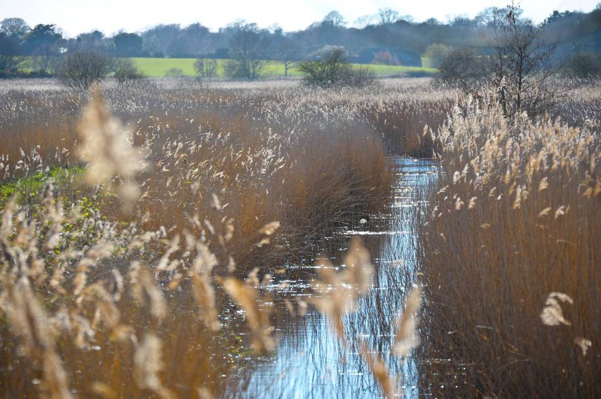 Minsmere (3 of 15)