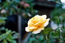 photo08_5a