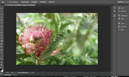 The differences between Lightroom and Photoshop