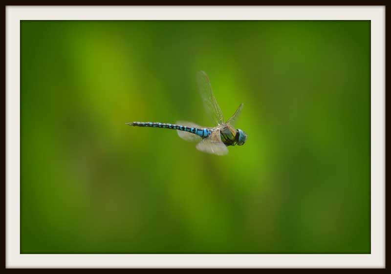 Society of International Nature and Wildlife Photographers