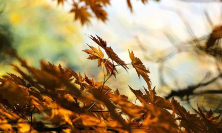 Autumn photography: 8 ways to ensure creative images