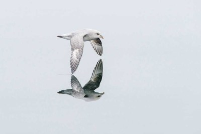 Birds-in-Flight-highly-commended