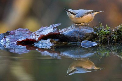 Garden-Birds-runner-up