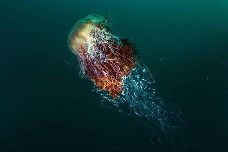 British Wildlife Photography Awards 2016 winners revealed