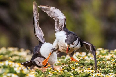 kung-fu-puffin-becky-bunce-age-18-reading-12-18-years-old-winner