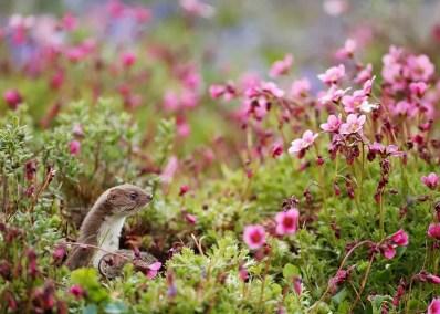 pretty-in-pink-robert-e-fuller-north-yorkshire-seasons-winner