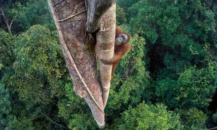Wildlife Photographer of the Year 2016 winners revealed