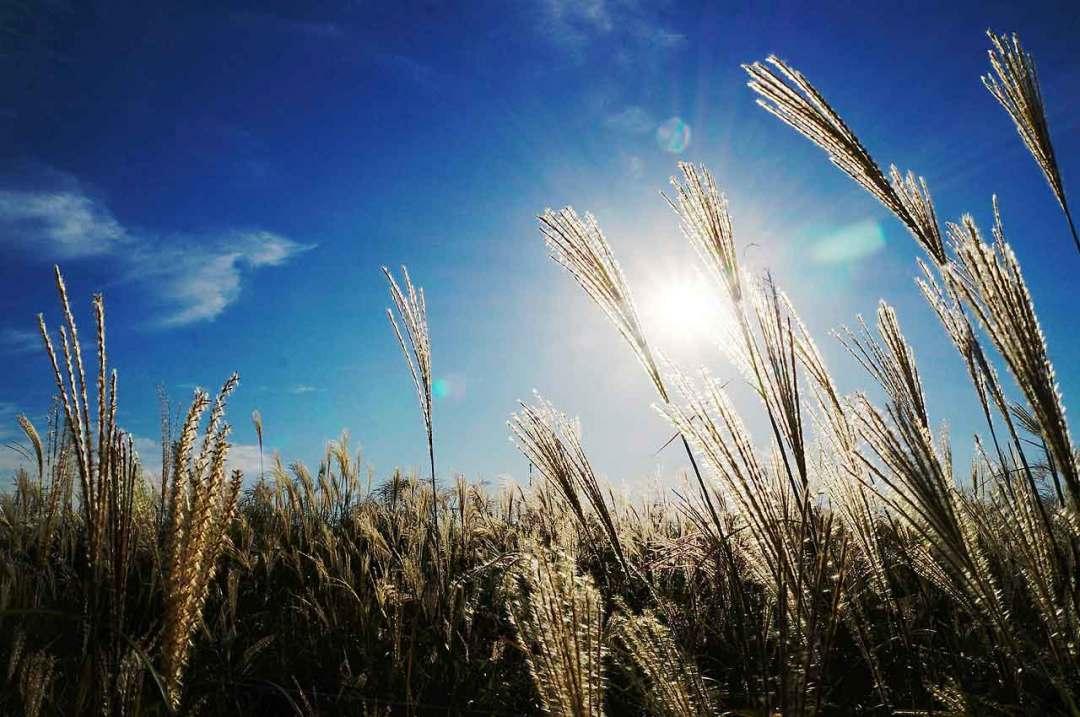 Autumn Photography Tips: 08 Take advantage of the sun