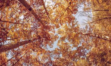 20 autumn photography tips for awesome pictures of Fall