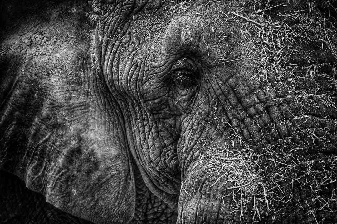 Black and white photography tips: 02 Textures and shapes