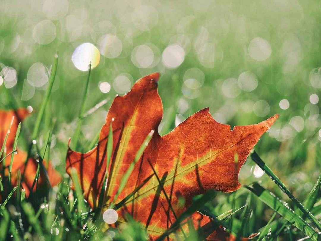 Autumn colours: Autumn colours: 03 avoid flare