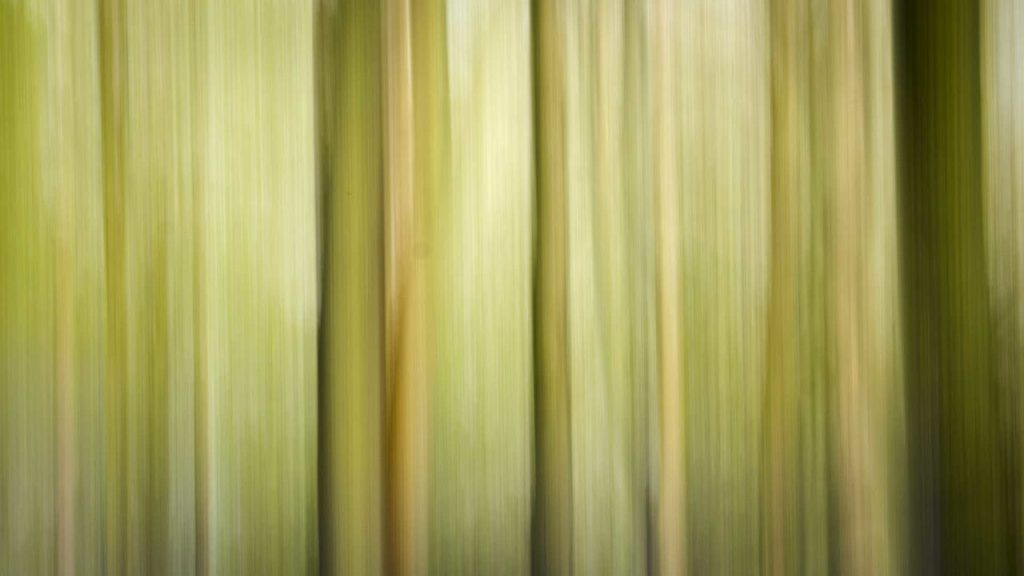 Woodland shot with Intentional Camera Movement