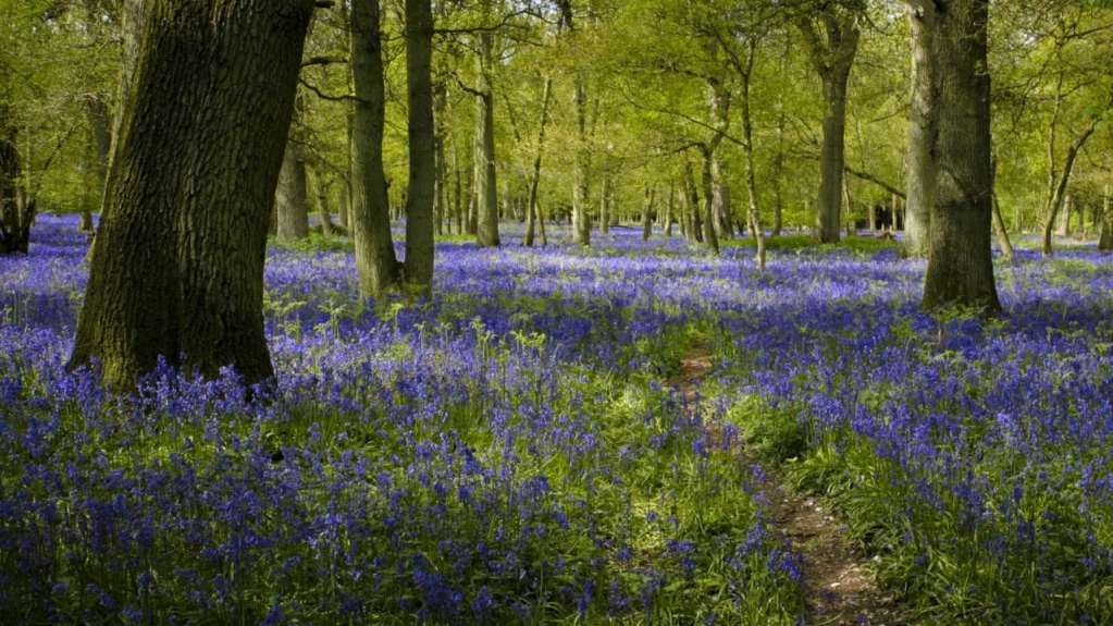 How to Photograph Bluebells woodland