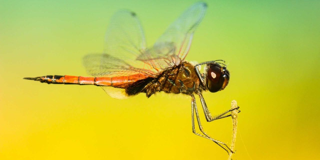 10 quick insect photography tips