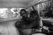 Wildlife Photographer of the Year People's Choice winner revealed
