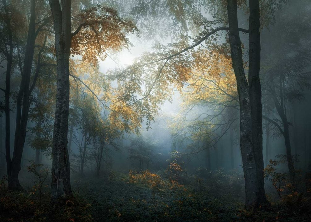 Bulgarian photographer Veselin Atanasov has won the Photographer of the Year prize for the Open competition