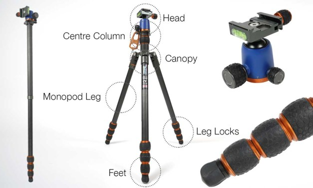 A complete guide to tripod anatomy