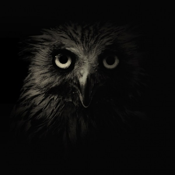 Черно-белые фотографии животных