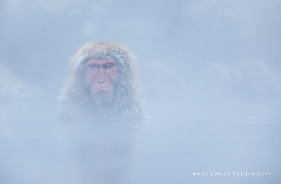 15 причин навестить японских снежных обезьян