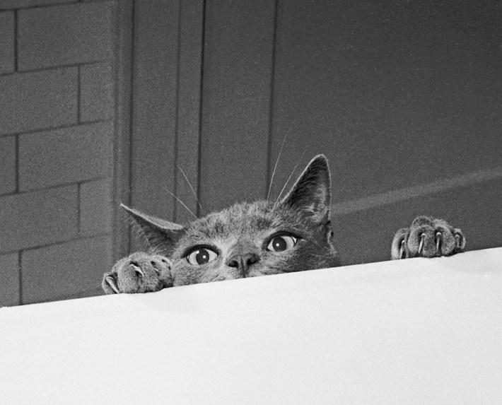 Уолтер Чандоха – человек, который 70 лет фотографировал кошек   13