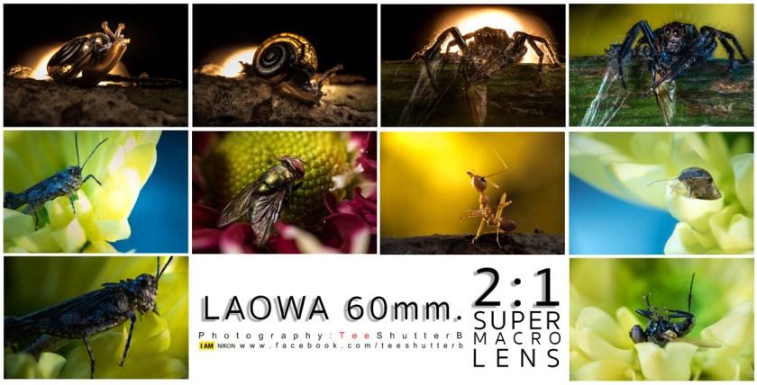 รีวิวเลนส์มาโคร 2:1 ราคาเบาๆ Laowa 60mm F2.8 Macro 2:1 เลนส์มาโครคุณภาพสูงที่มาพร้อมอัตรขยายแบบ 2:1 ที่ให้ความคมชัดสูง แต่ราคาเบาๆ ติดต่อ Camera Maker