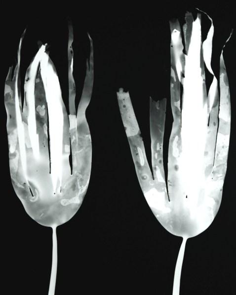 laminaria digitata IV (pair)