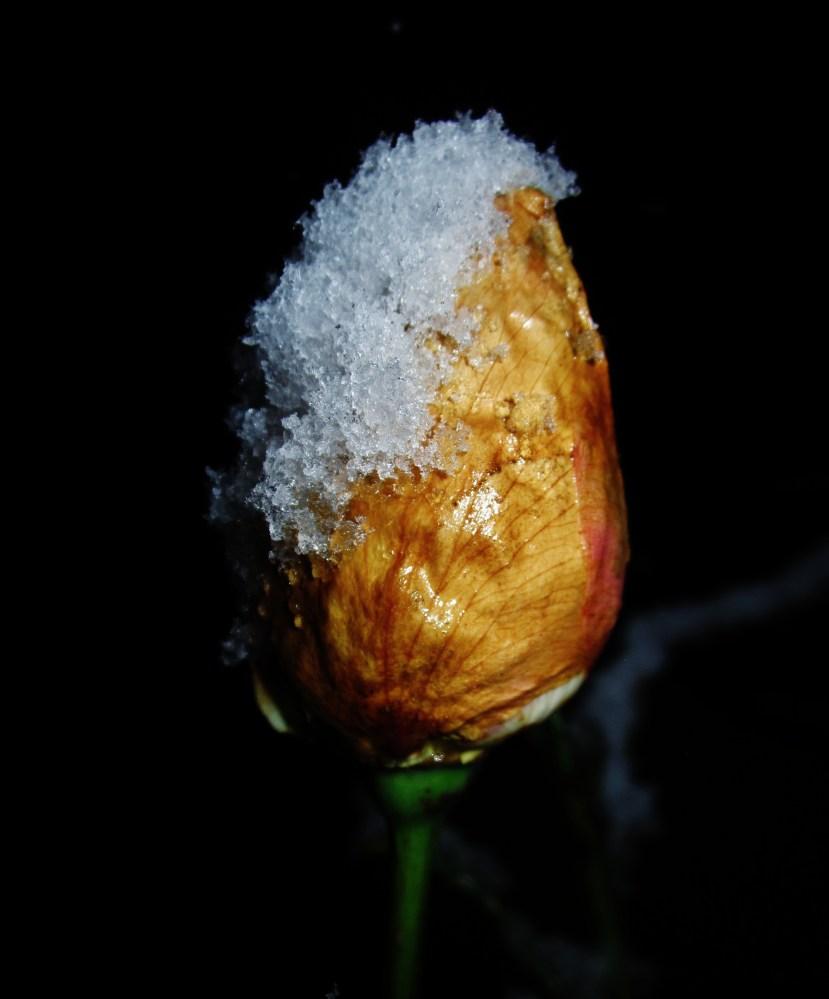 Snow (4/6)
