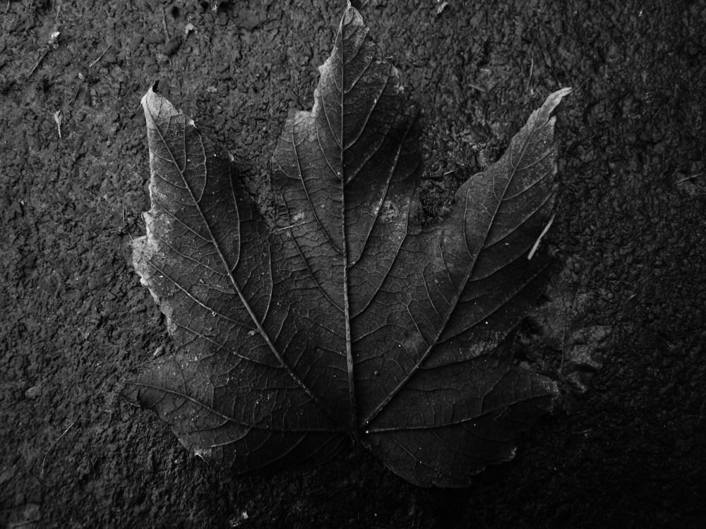 Wet Leaves (1/6)