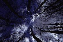 Looking up through the treetops at clouds, photograph by Brent VanFossen